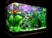 Fish tanks like these you can all get clean
