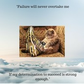 Quote from Kris Carr about persistence.