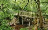 Puente de los Poohsticks