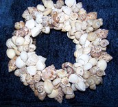 Buy beautiful seashells