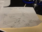 Rainforest food web