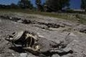 cali riverbed that has dried up killing hundreds of fish