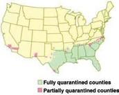 Quarantiened areas in the U. S.