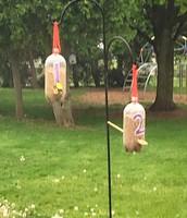 2nd Grade bird feeder