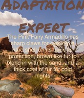 Adaptions of the pink fairy armadillo