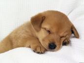 Lennie kills puppy