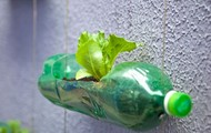 Growth with bottle
