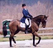 A Dressage horse?