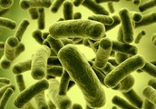 Characteristics of Bacteria