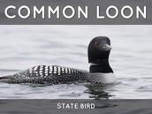 Minnesota state bird