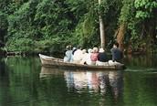 Visitar la Reserva Nacional de Tambopata