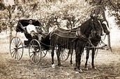Horses in the 1800's