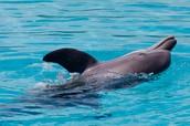 Dolphin Cay