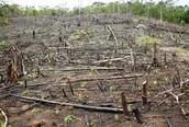 Deforestation impacting the ecosystem
