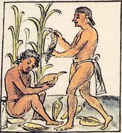 Maize Agriculture
