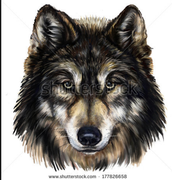 WOLVES HEAD