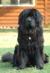 3. Seaman (Lewis's dog)