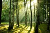 """""""J'irai par la forêt"""""""
