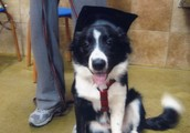 Pepper graduated from obedience school.