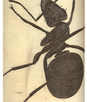 One of Robert Hooke's painting