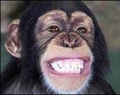 The Devious Monkey