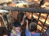 Pet a kangaroo, woo-hoo..