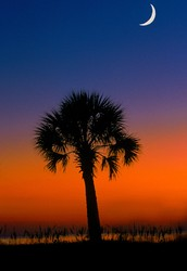 Why is there a Palmetto Tree on the South Carolina Flag?