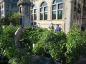 The Edible Campus Garden