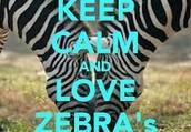 I LOVE ZEBRA'S!!!!!!!