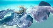 Ocean Ramsey's Website Picture