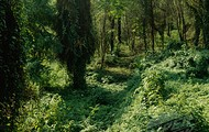 Beautiful Forest!