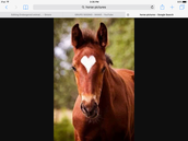 The forehead  horse