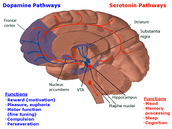 Active neurochemical processes