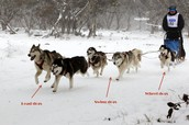 Sled Dog Labels