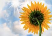 how do plants capture sun light
