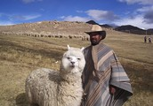What are some animals raised in Bolivia? Where are they raised?