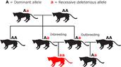 Species Genetics