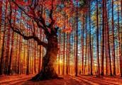 Есенно равноденствие - Екскурзия: Траянови врата