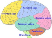 Intro of the human brain