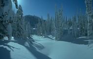 The taiga in the winter