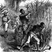 Barbados history of South Carolina...