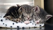 Litter of 3 Saved From Abandoned Home
