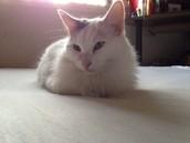 My cat, Betty
