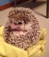 Spike the Hedgehog visits Grissom
