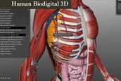 Human Biodigital 3D