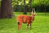 Critically Endangered Species
