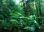 Rainforests are awesome