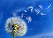Environmental Allergies