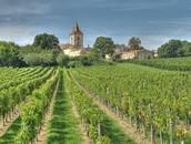 Un vignoble en Bordeaux
