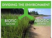Biotic + Abiotic